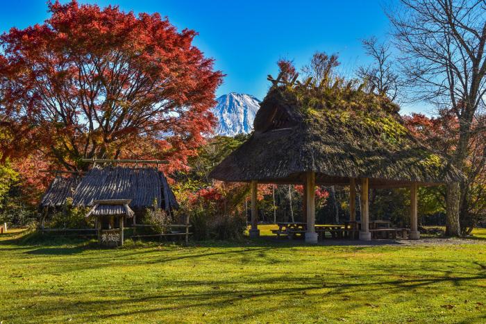 野鳥の森公園_a0307264_15531419.jpg