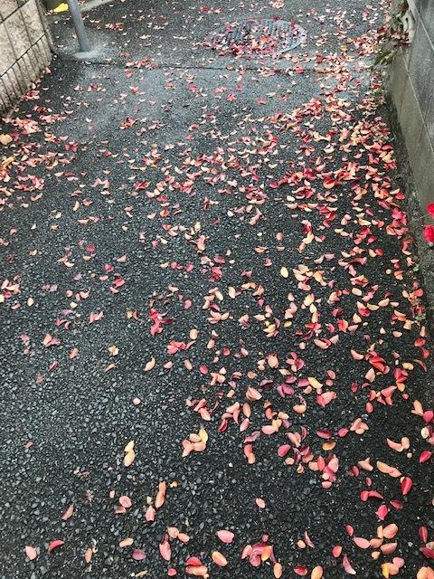 紅葉の季節_f0256164_15062772.jpg