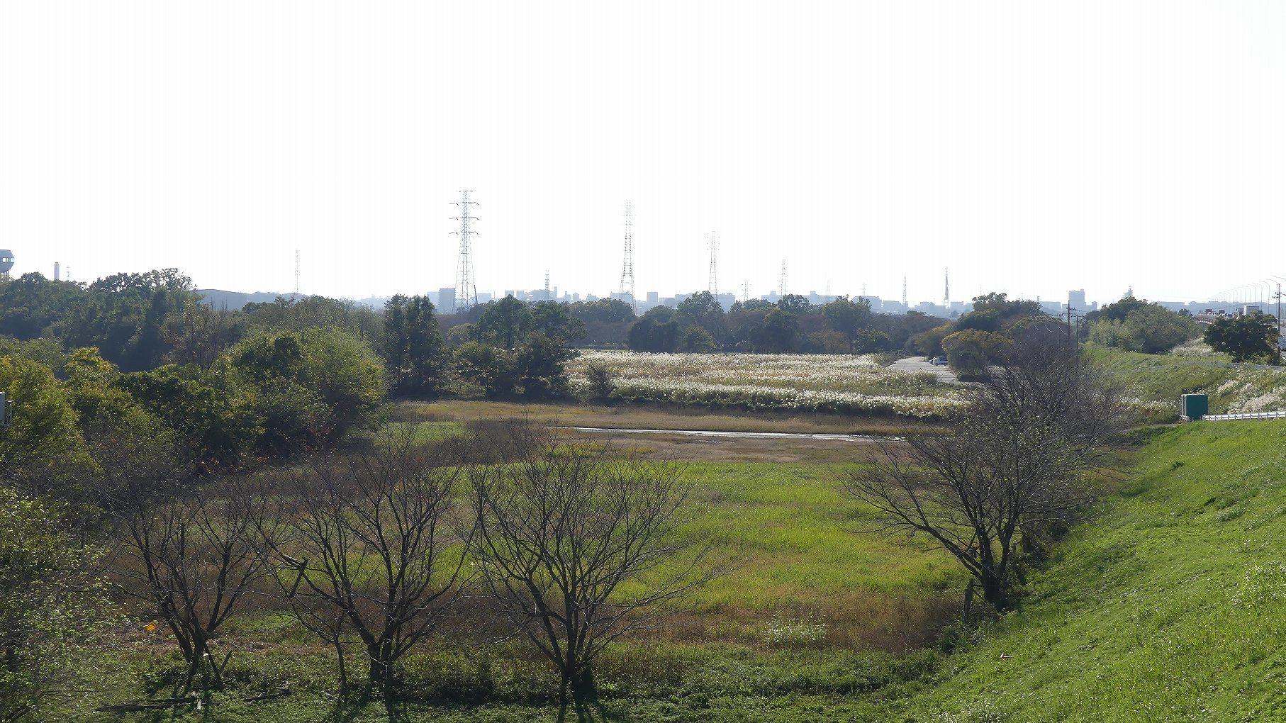 秋ヶ瀬公園ふたりぼっち その3_a0185081_10494407.jpg