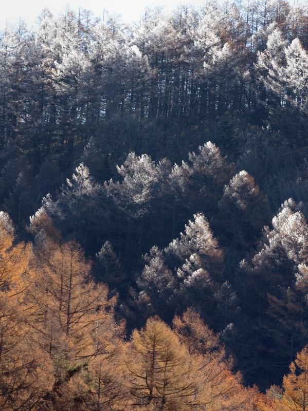 先週末は霧氷の朝(ゴジュウカラ)_a0204089_223067.jpg