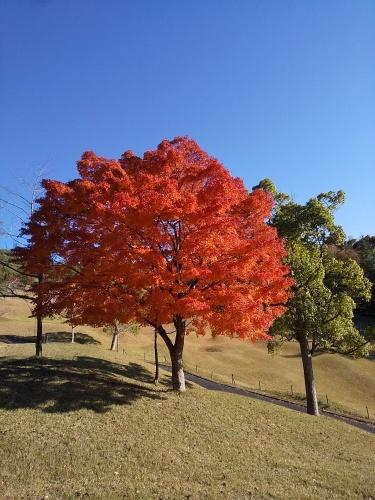No.4452 11月17日(日):原田さんと秩父でゴルフ_b0113993_23593911.jpg