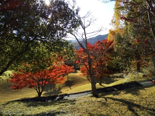 No.4452 11月17日(日):原田さんと秩父でゴルフ_b0113993_23595390.jpg