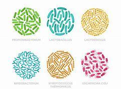 運動能力の向上にも腸内細菌が影響している_b0179402_11482621.jpg