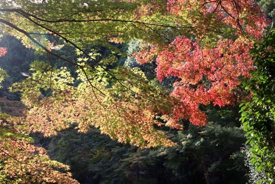 紅葉が始まった 千束の吟松寺_e0048413_20143782.jpg