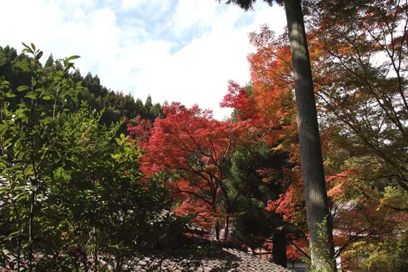 紅葉が始まった 千束の吟松寺_e0048413_20202536.jpg