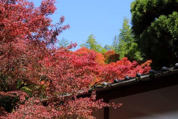 紅葉が始まった 千束の吟松寺_e0048413_20203352.jpg
