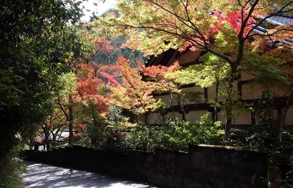 紅葉が始まった 千束の吟松寺_e0048413_20205693.jpg