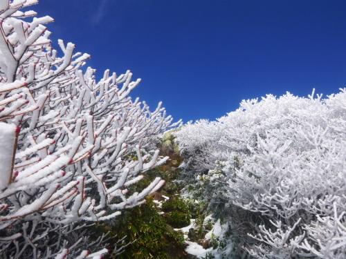 2019.11.8/9 中ノ岳登山! 1日目_a0236914_08115296.jpg