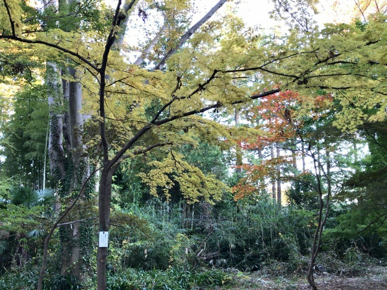 神代植物公園に行ってきました!_b0383324_22330967.jpg