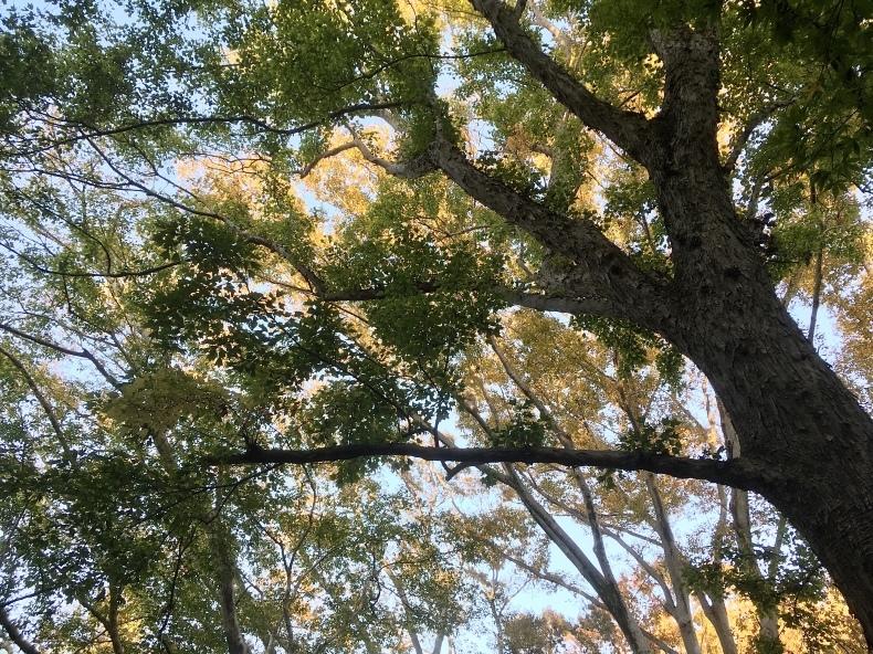 神代植物公園に行ってきました!_b0383324_22334098.jpg