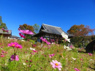 奈良を楽しむ・・4_e0030924_14252759.jpg