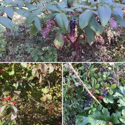 秋の色を楽しんでいます_a0074130_22440841.jpeg