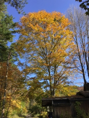 秋の色を楽しんでいます_a0074130_22484799.jpeg