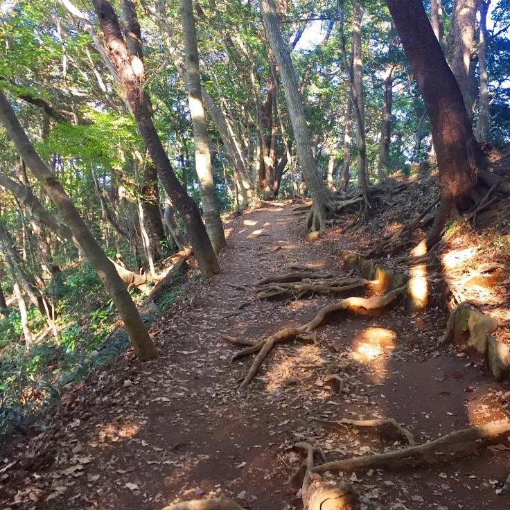 森林浴〜高尾山の紅葉はまだまだこれから_a0018237_11431342.jpeg