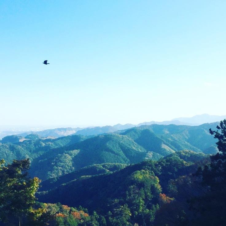 森林浴〜高尾山の紅葉はまだまだこれから_a0018237_11433869.jpeg