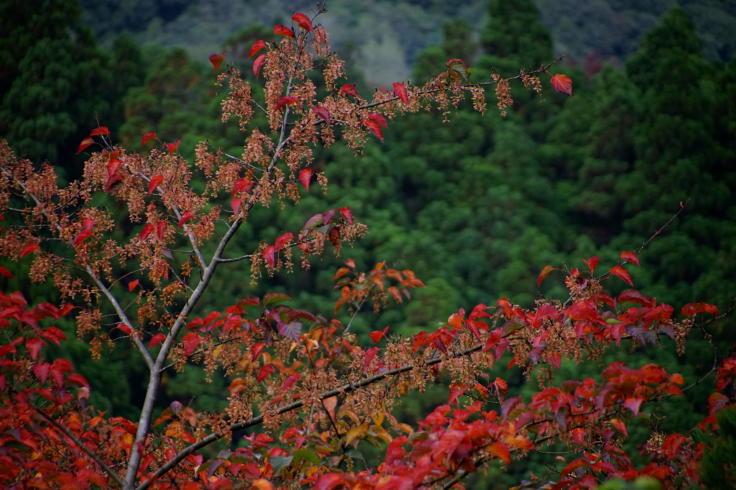 島の秋色 - フルサイズデジタルと古い非デジタル専用高倍率ズームレンズ #3_b0060239_20545172.jpg