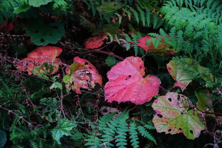 島の秋色 - フルサイズデジタルと古い非デジタル専用高倍率ズームレンズ #3_b0060239_20564819.jpg