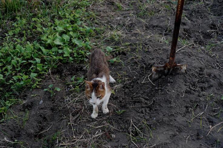 Cat by me, love_b0060239_21341633.jpg