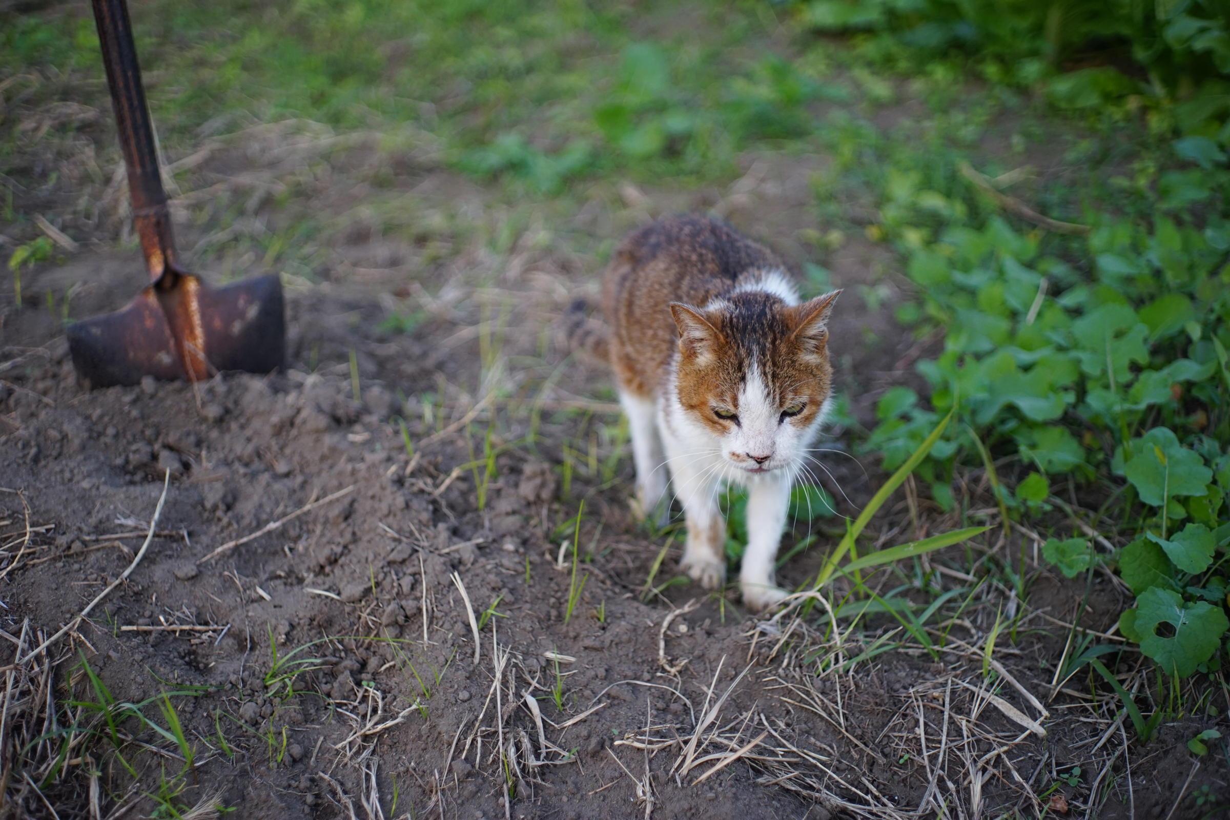 Cat by me, love_b0060239_21343518.jpg