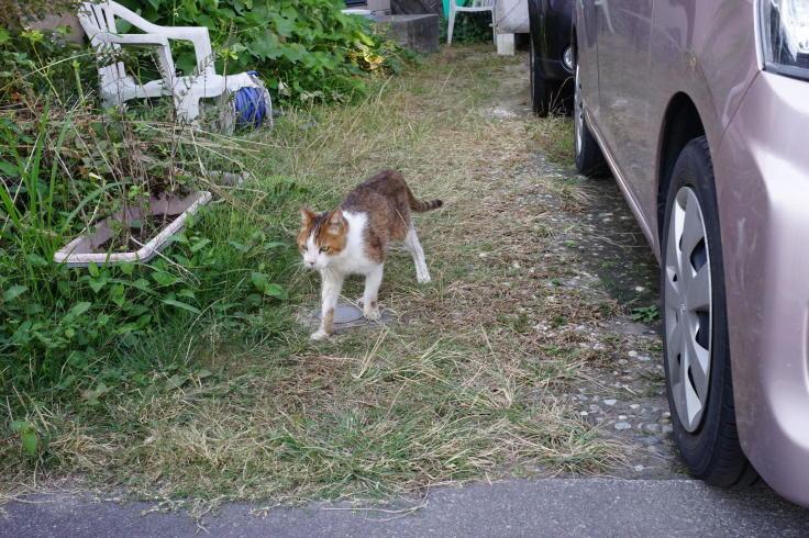 Cat by me, love_b0060239_21424398.jpg