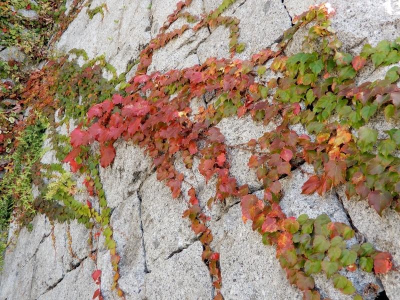 前奏曲「秋のパレット」 🎨 prelude《palette d\' automne》_f0374041_17054037.jpg