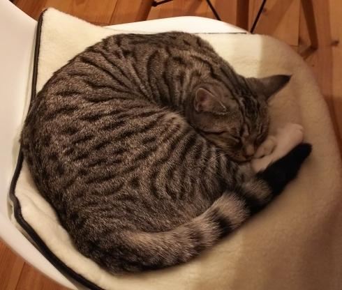 借りてきた猫_e0002850_12440077.jpg