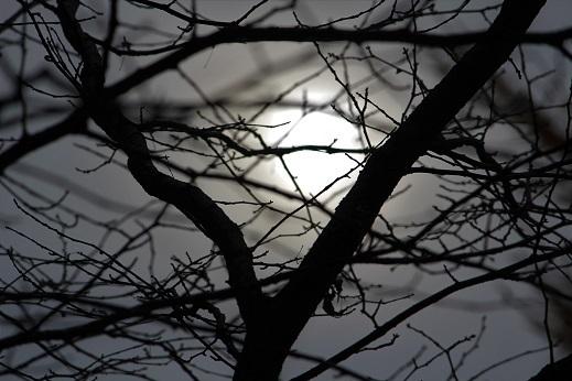晩秋の豊平公園野外庭園。「きたえーる」で高校バレー大会です。_f0362073_10123777.jpg