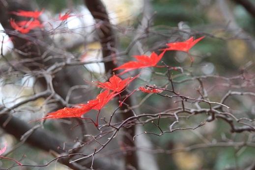 晩秋の豊平公園野外庭園。「きたえーる」で高校バレー大会です。_f0362073_10130566.jpg