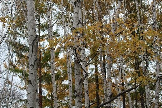 晩秋の豊平公園野外庭園。「きたえーる」で高校バレー大会です。_f0362073_10133295.jpg