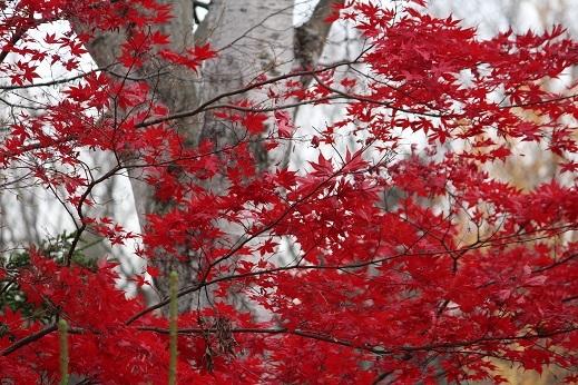 晩秋の豊平公園野外庭園。「きたえーる」で高校バレー大会です。_f0362073_10134960.jpg