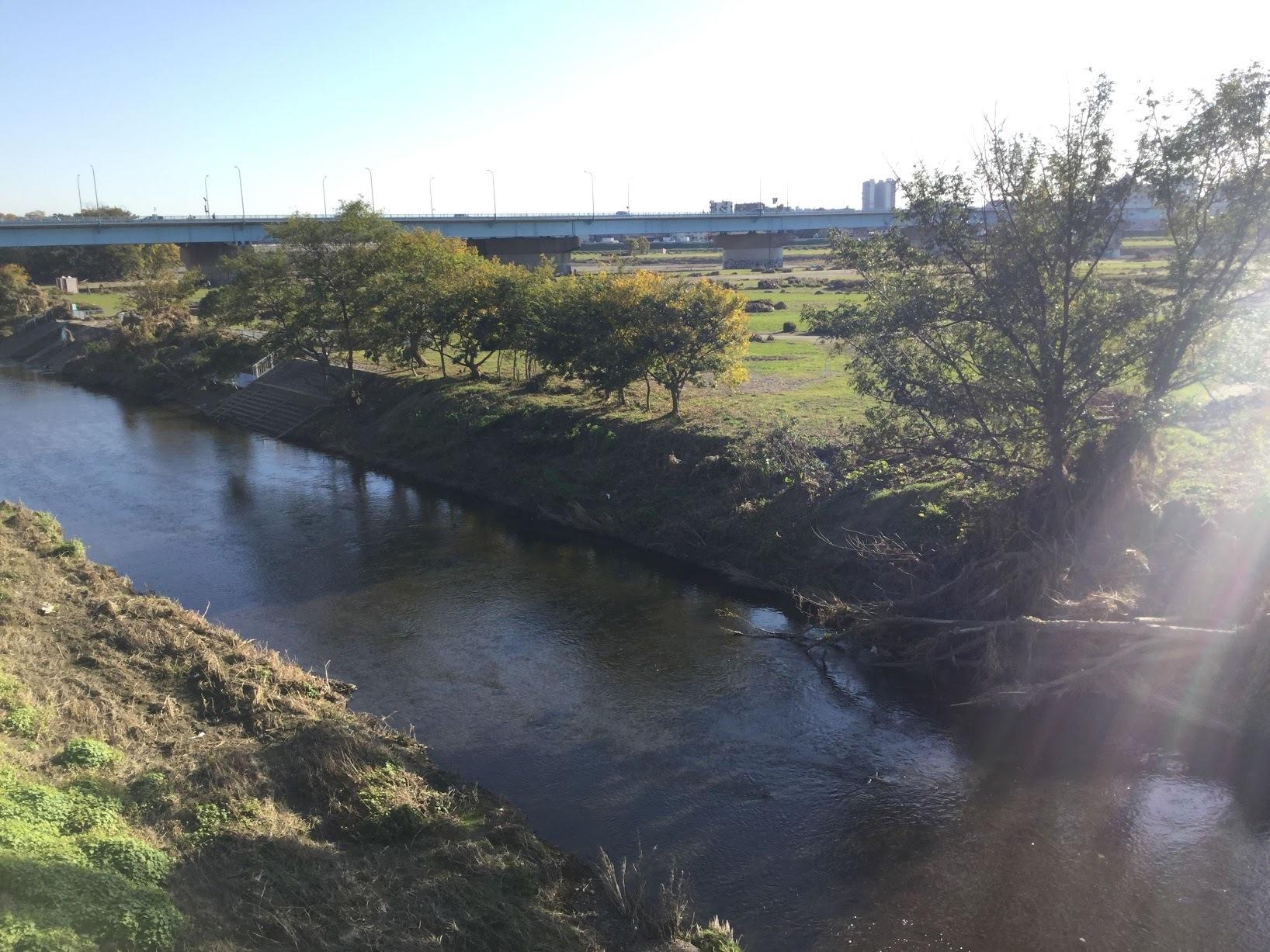 11月17日の原っぱアトリエは野川ベースで実施します。_c0091679_15181495.jpg