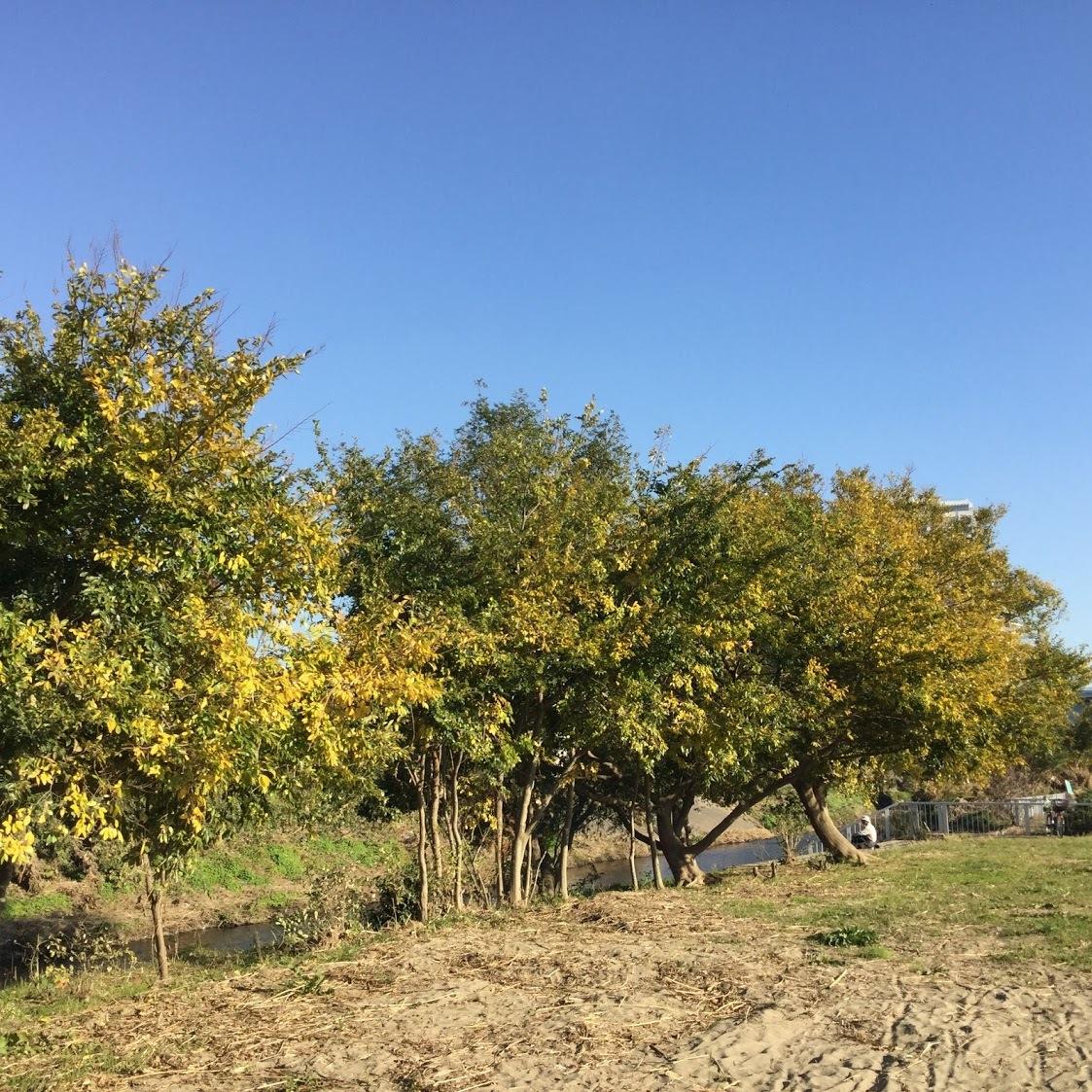 11月17日の原っぱアトリエは野川ベースで実施します。_c0091679_15193890.jpg