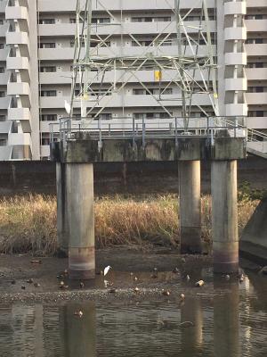 秋散歩_d0169411_23000772.jpg