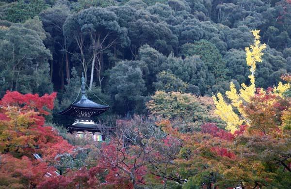 紅葉が始まった 永観堂_e0048413_21185150.jpg
