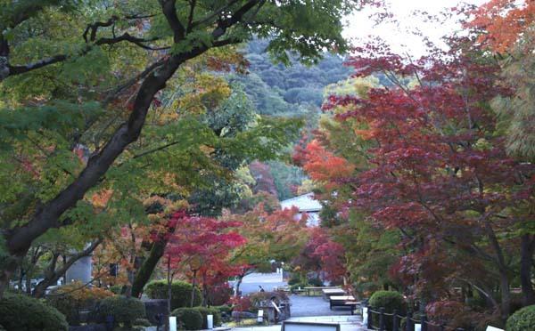 紅葉が始まった 永観堂_e0048413_21185881.jpg