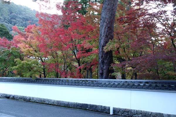 紅葉が始まった 永観堂_e0048413_21190295.jpg