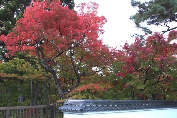 紅葉が始まった 永観堂_e0048413_21190651.jpg