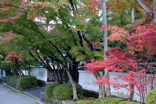 紅葉が始まった 永観堂_e0048413_21192431.jpg