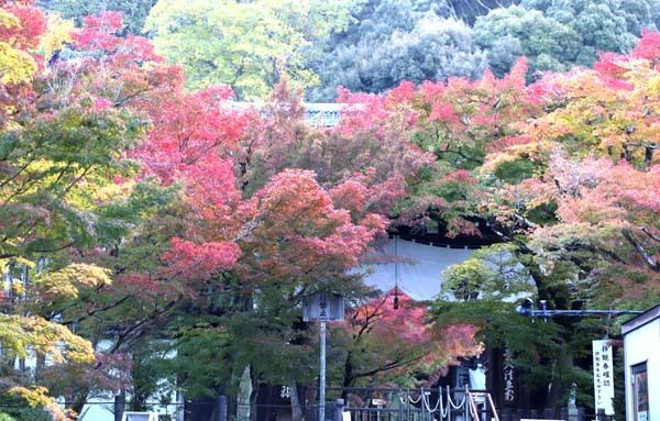 紅葉が始まった 永観堂_e0048413_21192847.jpg