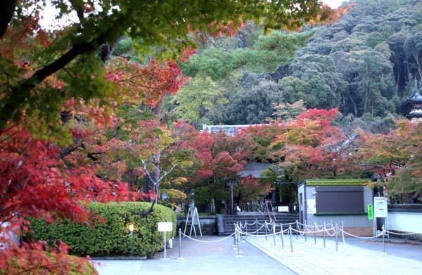 紅葉が始まった 永観堂_e0048413_21193042.jpg