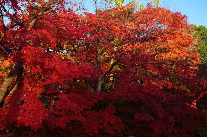 鍬山神社_e0177413_14054707.jpg