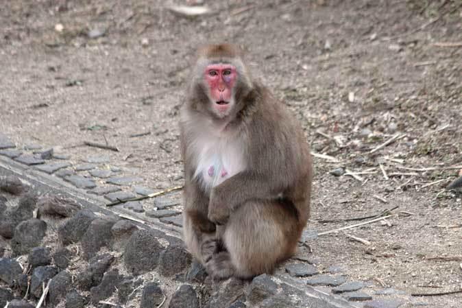東山動植物園~ツシマヤマネコとニホンザル(December 2018)_b0355317_21121597.jpg