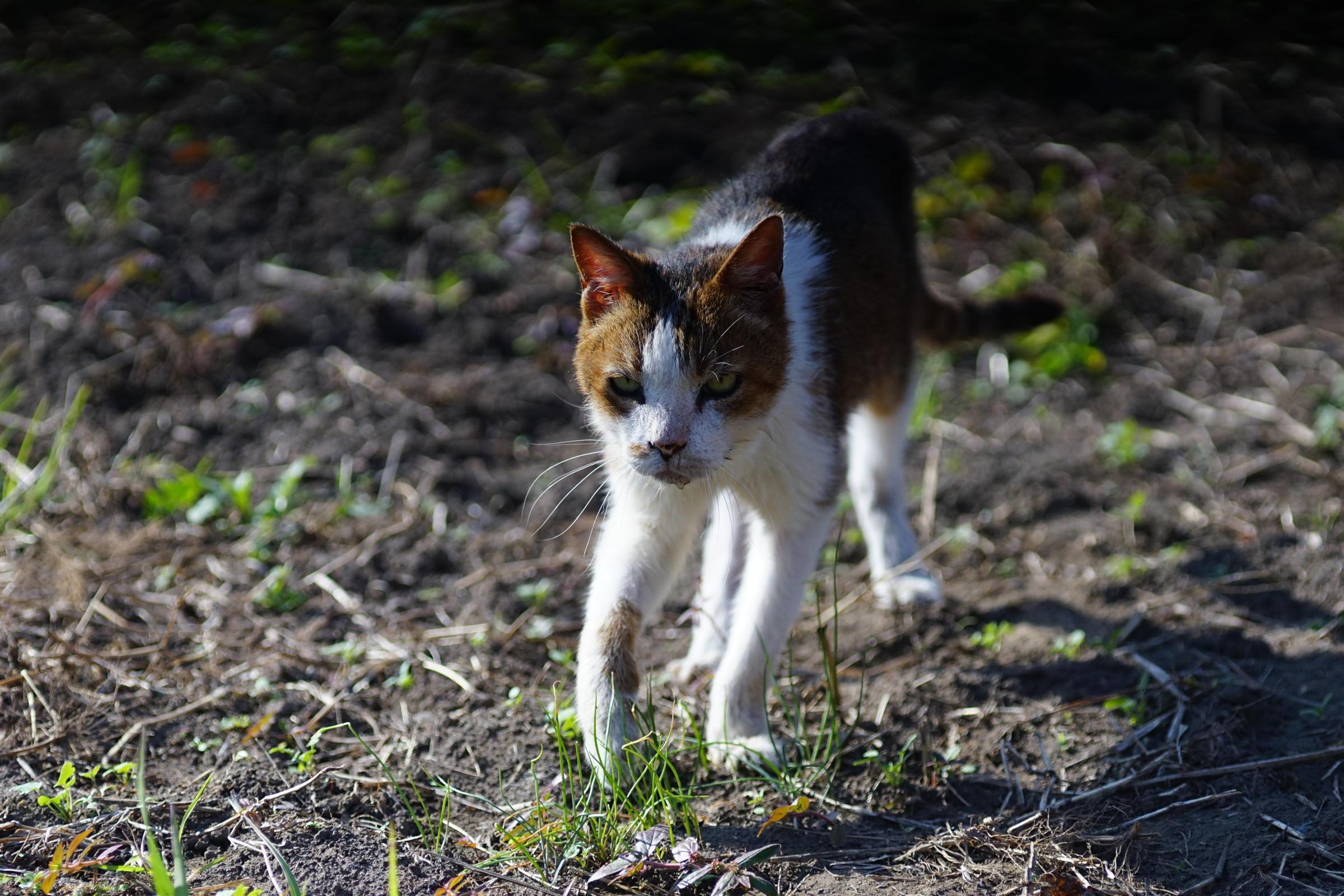 Cat by me, love_b0060239_18132531.jpg