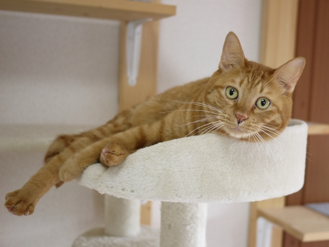 猫のお留守番 茶ちゃくん編。_a0143140_20080940.jpg