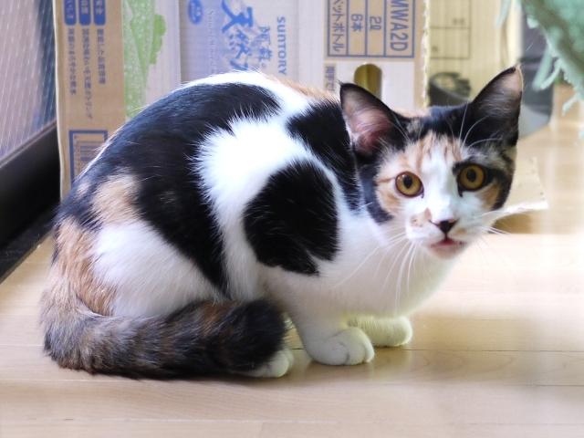 猫のお留守番 小麦ちゃん編。_a0143140_20382649.jpg