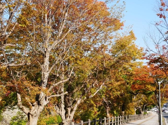 和歌山城の紅葉便り  2019-11-18 00:00  _b0093754_23191388.jpg