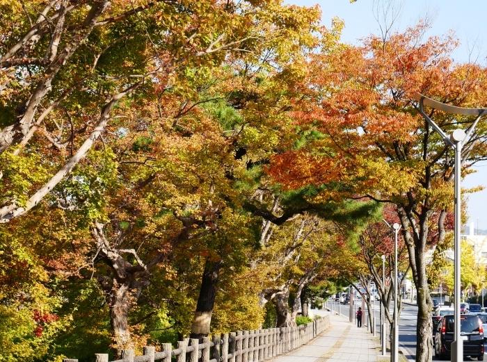 和歌山城の紅葉便り  2019-11-18 00:00  _b0093754_23193580.jpg