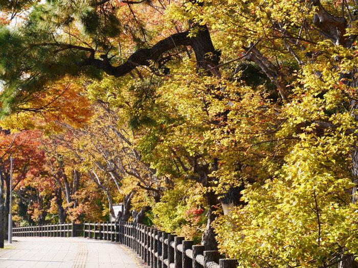 和歌山城の紅葉便り  2019-11-18 00:00  _b0093754_23211579.jpg