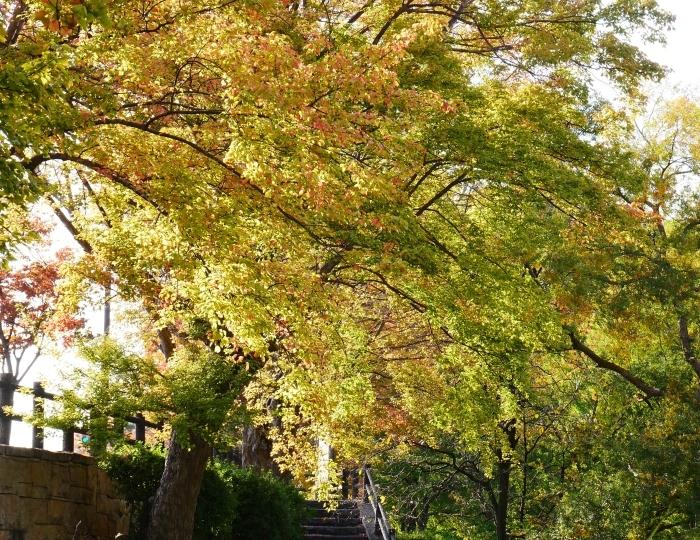 和歌山城の紅葉便り  2019-11-18 00:00  _b0093754_23213415.jpg