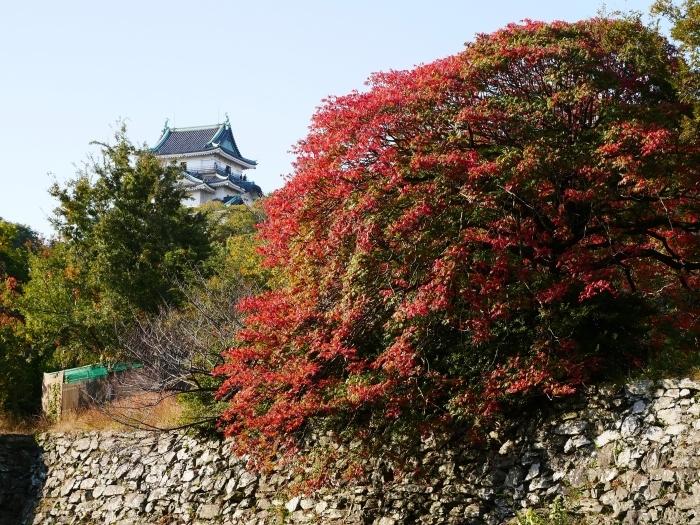 和歌山城の紅葉便り  2019-11-18 00:00  _b0093754_23215323.jpg